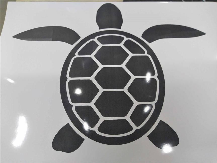 Vẽ hình rùa con