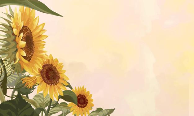 Nguồn gốc hoa hướng dương