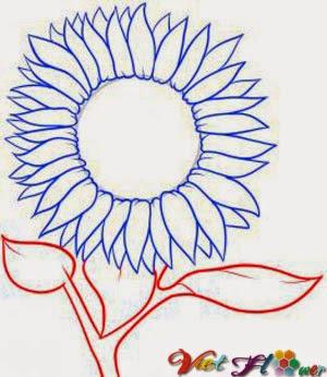 Vẽ hoa hướng dương bằng chì đơn giản