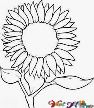 Vẽ hoa hướng dương bằng chì