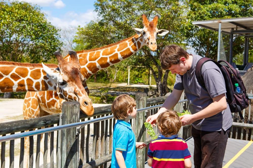 Nghỉ hè nên làm gì - tham quan sở thú
