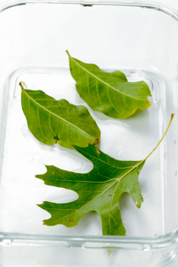 Thí nghiệm STEM Plant nghiên cứu về quá trình hô hấp của thực vật