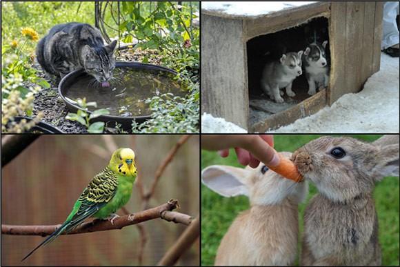 Một số loại động vật quen thuộc với các bé