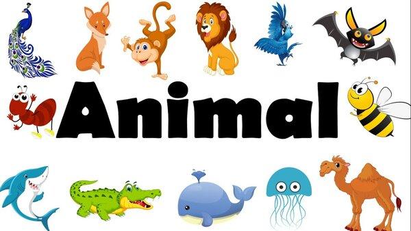 Giáo án mẫu STEM mầm non: Động vật cần gì để sống?