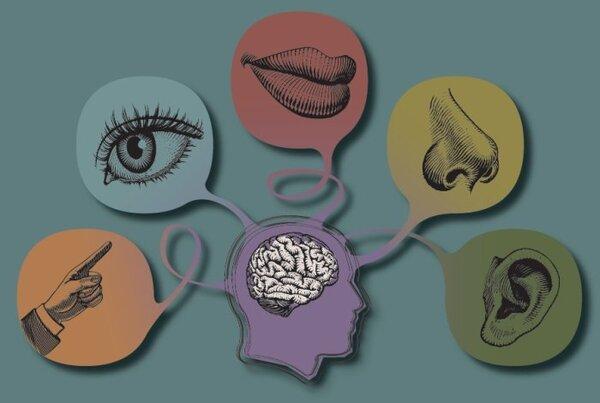 Giáo án STEM môn Văn: 5 giác quan của con người