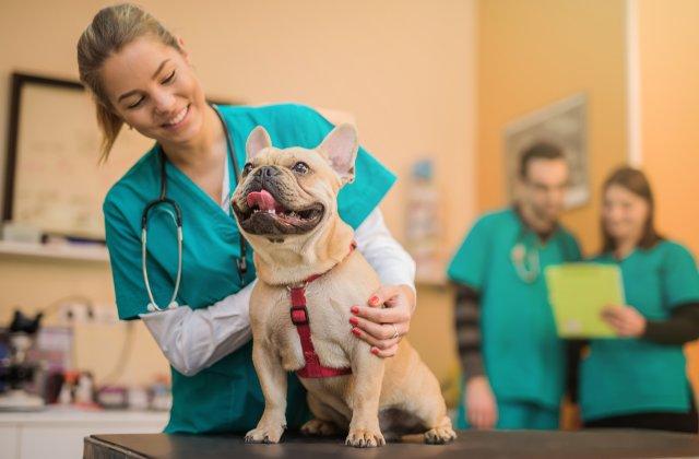 Nghề chăm sóc động vật và thú cưng